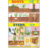 ROOTS CHART SIZE 24 X 36 CMS CHART NO. 85 - Indian Book Depot (Map House)
