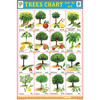 TREES CHART CHART SIZE 12X18 (INCHS) 300GSM ARTCARD