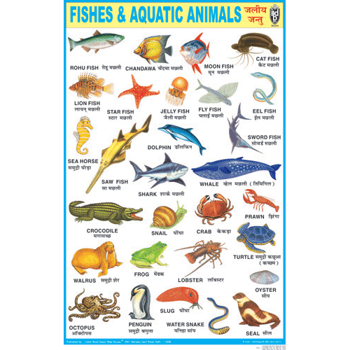 FISHES & AQUATIC ANIMALS CHART SIZE 50 X 75 CMS - Indian Book Depot (Map House)