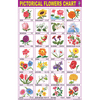 OUR FLOWERS CHART SIZE 50 X 75 CMS - Indian Book Depot (Map House)