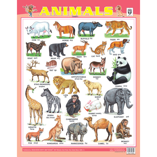 ANIMALS CHART SIZE 55 X 70 CMS - Indian Book Depot (Map House)