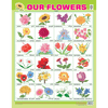 OUR FLOWERS CHART SIZE 55 X 70 CMS - Indian Book Depot (Map House)