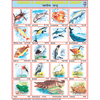 FISHES & AQUATIC ANIMALS CHART SIZE 55 X 70 CMS - Indian Book Depot (Map House)
