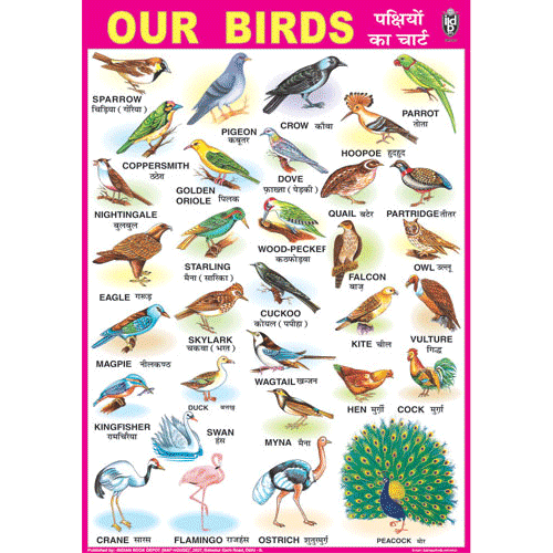OUR BIRDS CHART SIZE 70 X 100 CMS - Indian Book Depot (Map House)