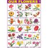 OUR FLOWERS CHART SIZE 70 X 100 CMS - Indian Book Depot (Map House)