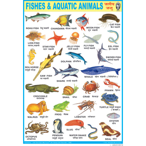 FISHES & AQUATIC ANIMALS CHART SIZE 70 X 100 CMS - Indian Book Depot (Map House)