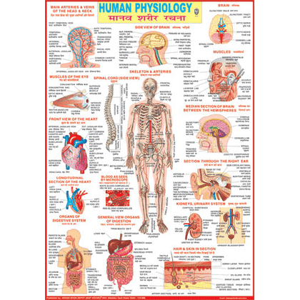 HUMAN PHYSIOLOGY CHART SIZE 70 X 100 CMS - Indian Book Depot (Map House)