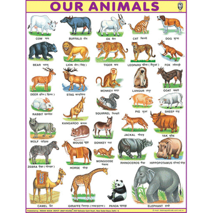 OUR ANIMALSJUMBO CHART SIZE 100 X 140 CMS - Indian Book Depot (Map House)