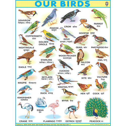 OUR BIRDSJUMBO CHART SIZE 100 X 140 CMS - Indian Book Depot (Map House)