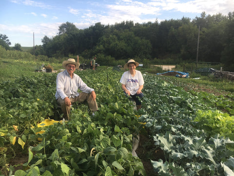 Volunteers pick beans in the garden at Turkey River Farm.