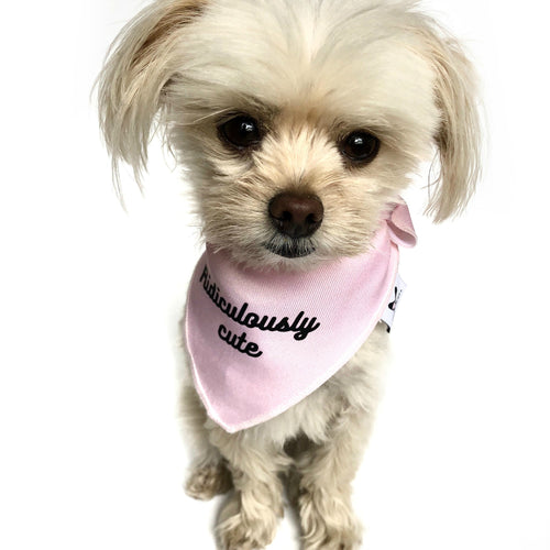 """Ridiculously cute"" Pink Dog Bandana - Dog Influencers"
