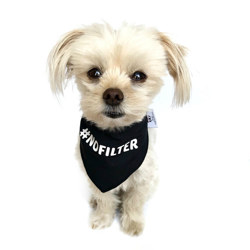 """ #NoFilter"" Black Dog Bandana - Dog Influencers"