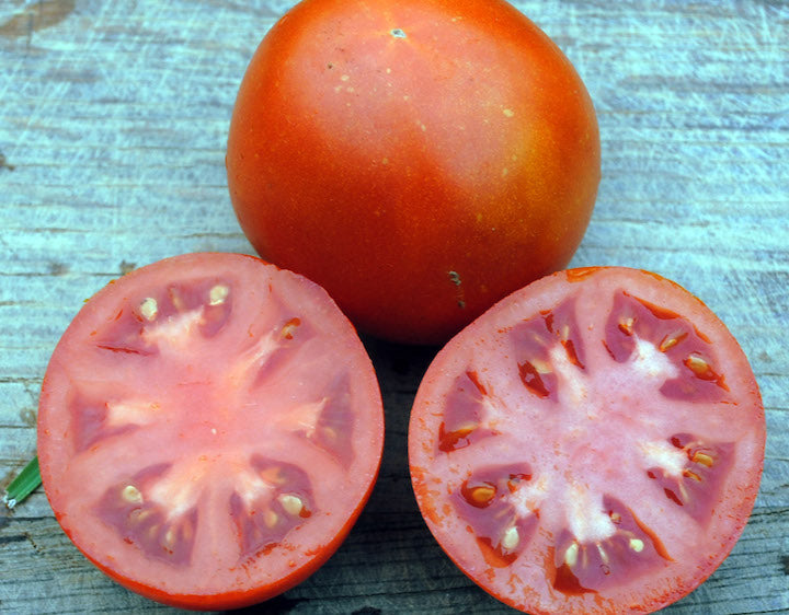 Tomato-Old Virginia-4.5 in