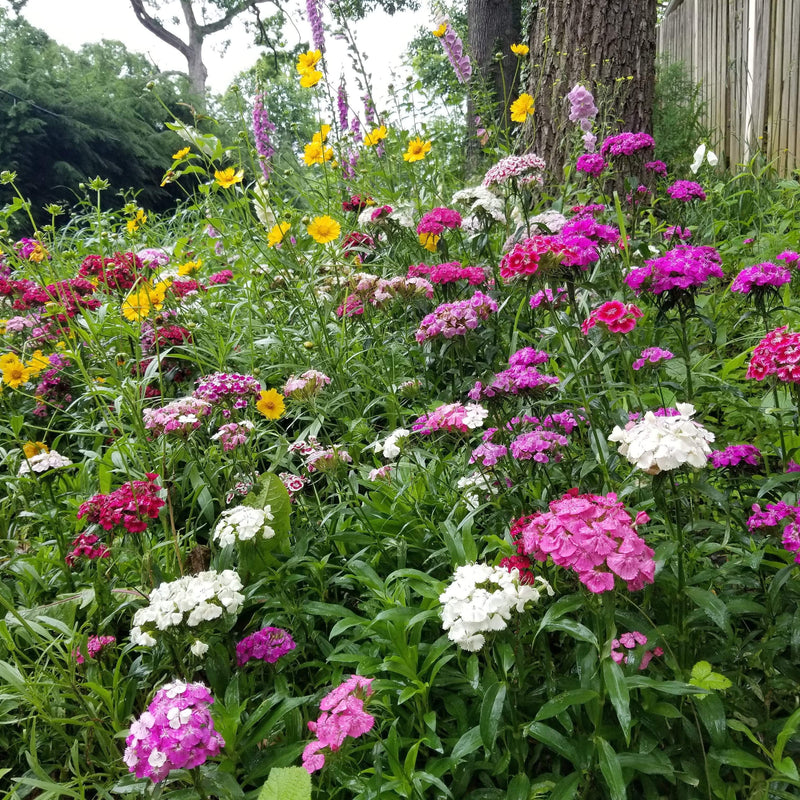 Partial Shade Flower Mix Seeds