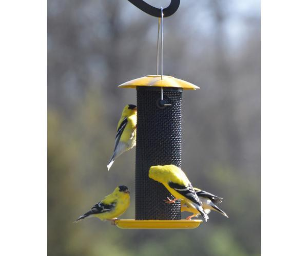 Petite Yellow Thistle Nyjer Feeder