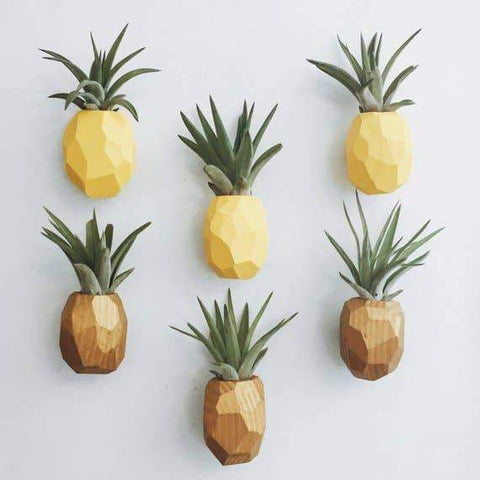 air plant in a pineapple holder