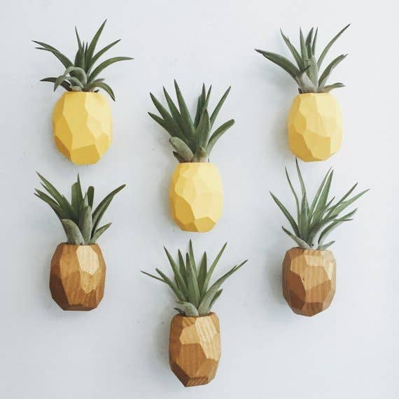 Pineapple Air Plant Magnets (PLANT INCLUDED)
