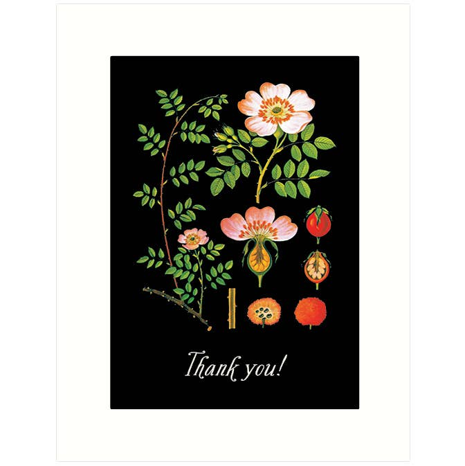 Rose | Thank You Card