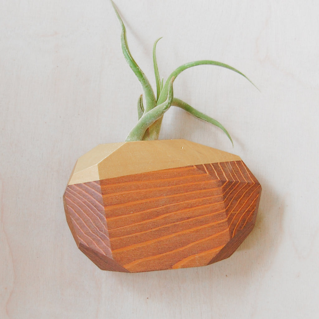 Large Geo Air Plant Holder