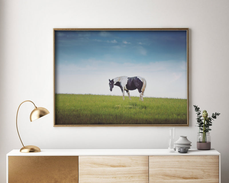 Horse And Landscape Photography