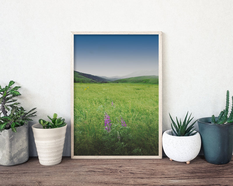 Meadow Landscape Photography