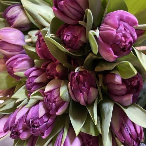 Our finest Dutch Tulips, hand picked and tied in a bouquet for your loved one.