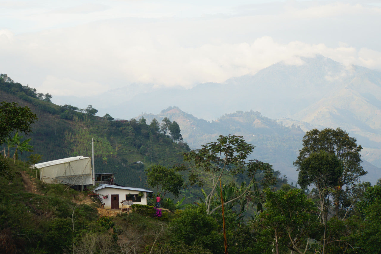 Las Cascadas Colombia - Green Coffee Beans