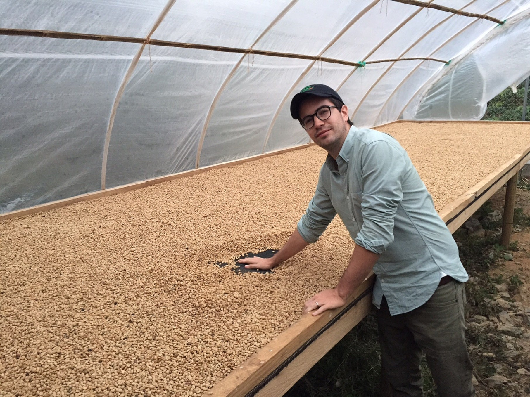 Finca Veracruz Colombia - Green Coffee Beans