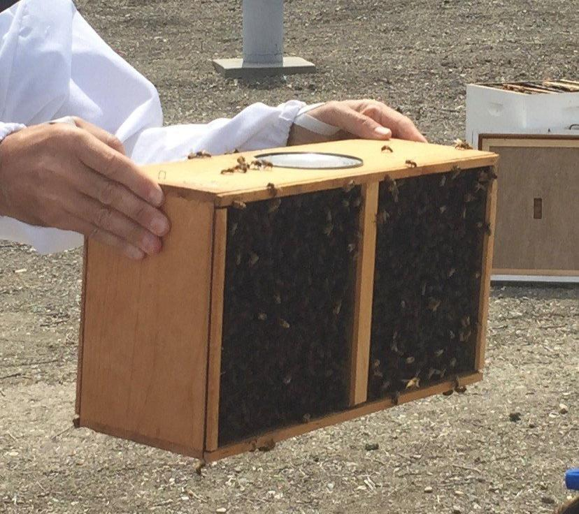 3 lb. Package Bees With Queen - Pickup Only
