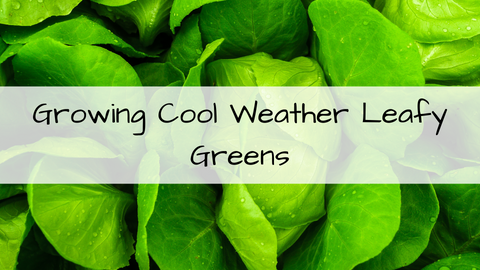 Nov 1st 11am - Growing Cool Weather Leafy Greens with Amanda Streets of Living Roots Eco Design