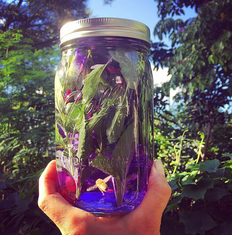 Nov 8th 11 am - Crafting Herbal Infusions for Seasonal Ailments with Grace Behnke of Earth Up Herbals