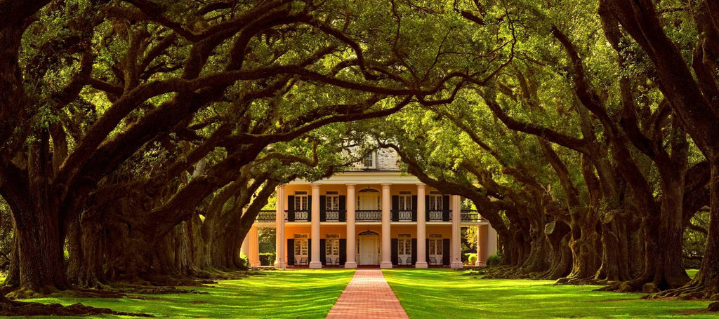 Que Faire En Lousiane : Oak Alley Plantation