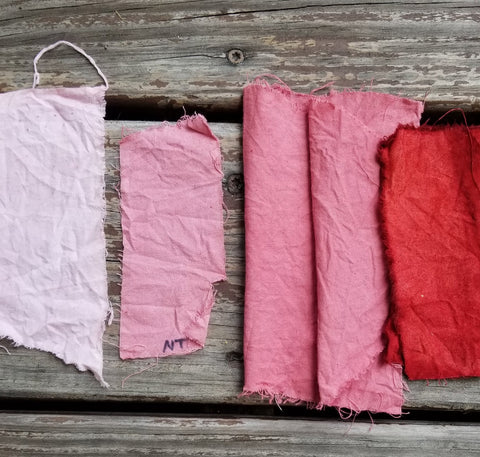Madder dyed cotton samples, from left to right: untreated, lycopodium treated, lycopodium and sumac tanning treated (2 pieces), alum acetate mordant.
