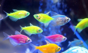 How to keep and maintain tropical fish tank