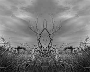 Open image in slideshow, Saltmarsh Stag