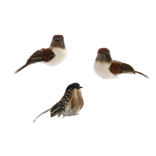 Birds on Clips, Feather - Assorted - Box of 3 - Assorted