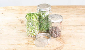 seed sprouting lids and jars and how to sprout seeds
