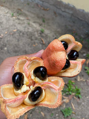 Ackee from Jamaica