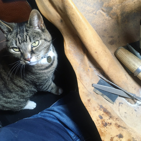 Alice's cat Bodhi is the real boss, and sits on Alice's lap while she works!