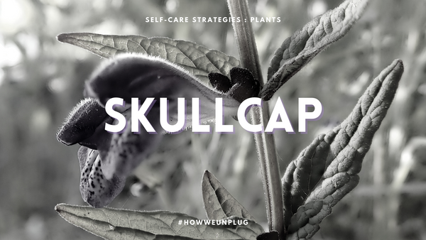 Self Care Strategies : Plants | Skullcap - Unplugged Essentials