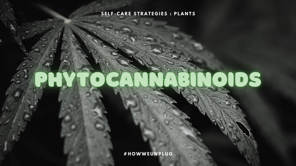 Self Care Strategies | What are Phytocannabinoids