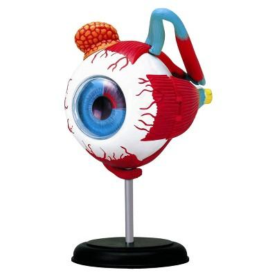 John N. Hansen Human Eyeball Anatomy Model-3.5