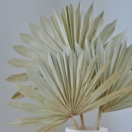 striking close up of natural coloured palm bunch
