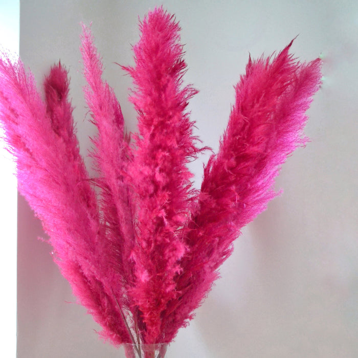 Fluffy Hot Pink Pampas Bunch