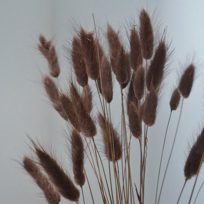 close up of dried bunny tail grasses in deep chocolate brown colour