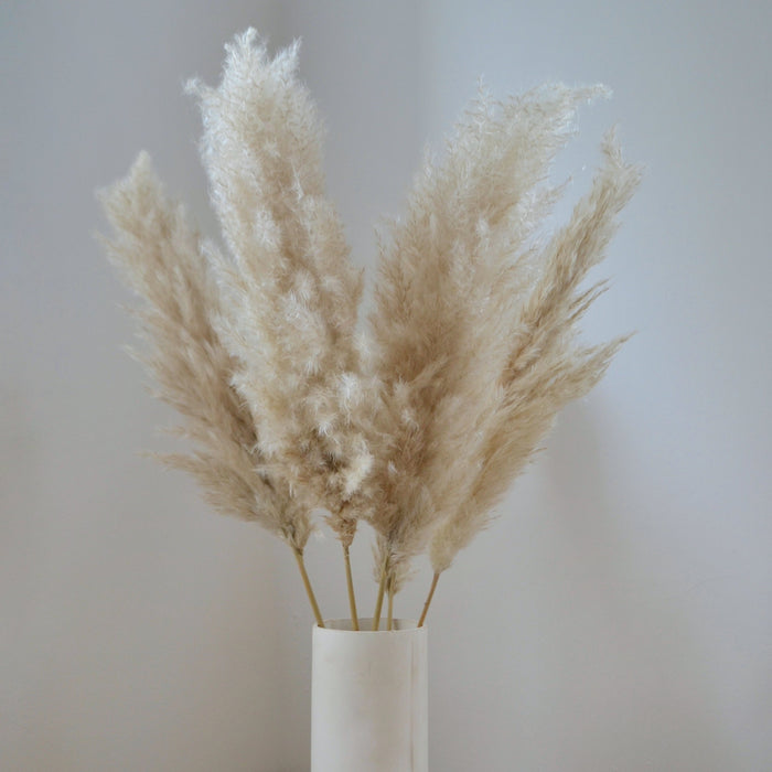 Fluffy Light Brown Pampas Bunch