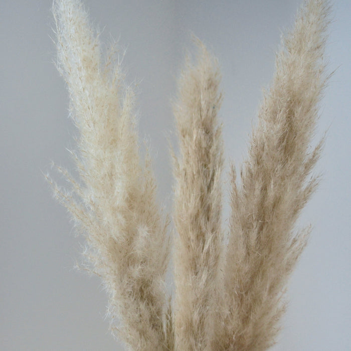 Light Brown Pampas Bunch