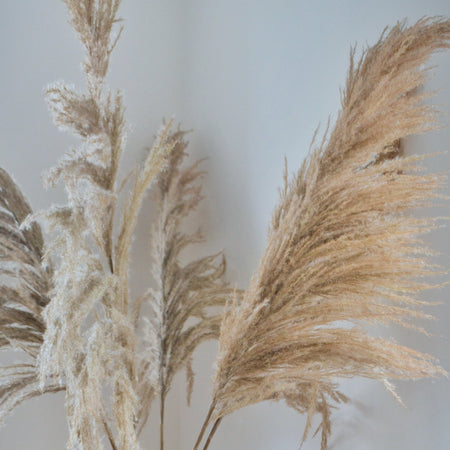Close up of tall brown feather pampas bunch