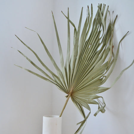 Giant Natural light moss green Palm in simple, white vase