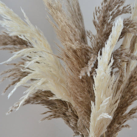 Close up of feathery brown and white pampas cloud bunch